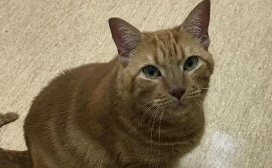 "Manni – 16 years old – ""Feline Extraordinaire"""